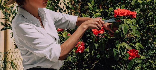 Девушка срезает ножницами розы из куста. понятие о цветоводстве, сельском хозяйстве, хобби. смешанная техника