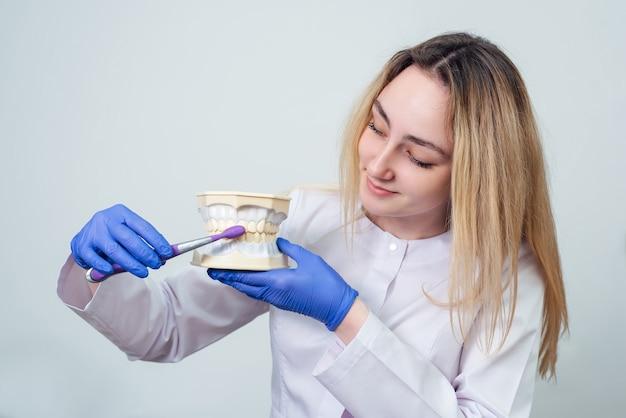 여자 치과 의사는 그녀의 손에 치아의 체적 모델을 보유
