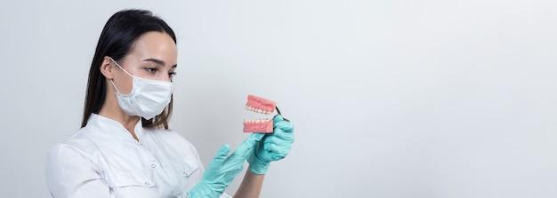 Девушка-врач-дантист в белом халате держит макет зубов.