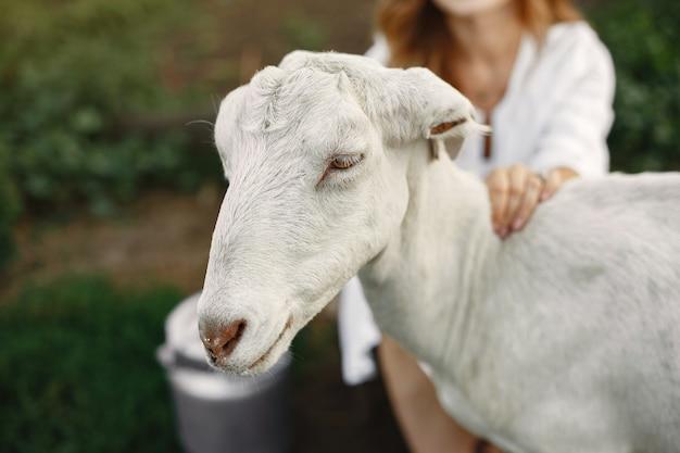 白ヤギの少女農夫。女性と小さなヤギの緑の草。エコファーム。農場と農業の概念。村の動物。女の子はかわいいヤギを再生します。 f