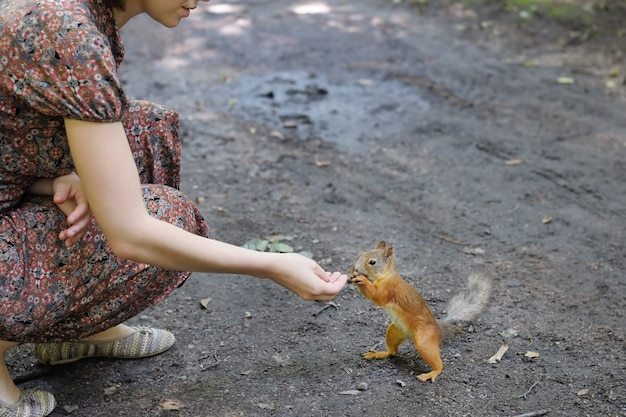 Girl feed funny little squirrel in summer park