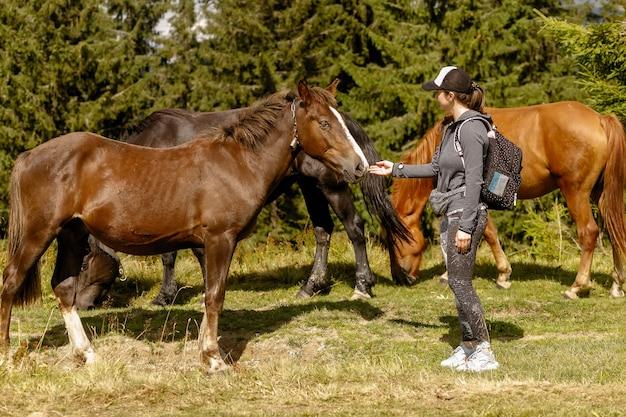 Девушка кормит сено лошади летом. девушка кормит лошадей в лесу
