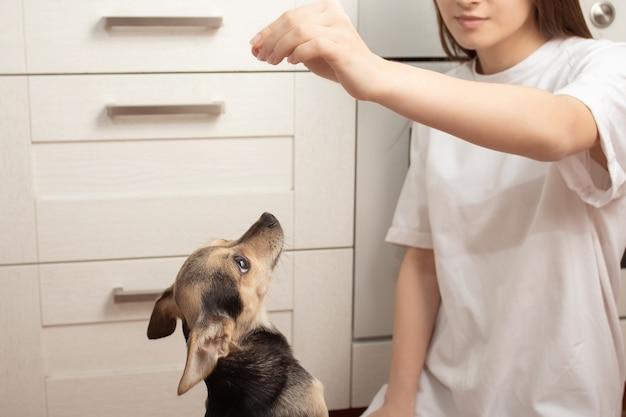 少女は自宅の台所で犬に餌をやる