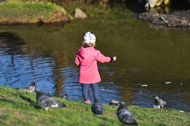 Девочка кормит птиц на озере. маленькая девочка кормит водоплавающих птиц на небольшом озере. берег в осеннем парке