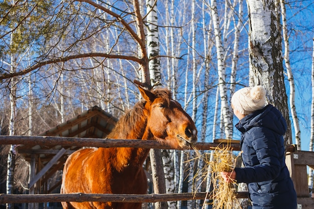 Girl gives horse hay with outstretched hands