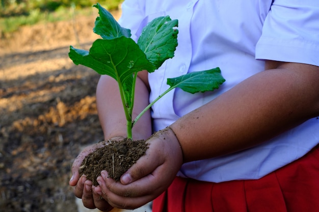 Girl hand holding seedling cabbage vegetable in the organic farm