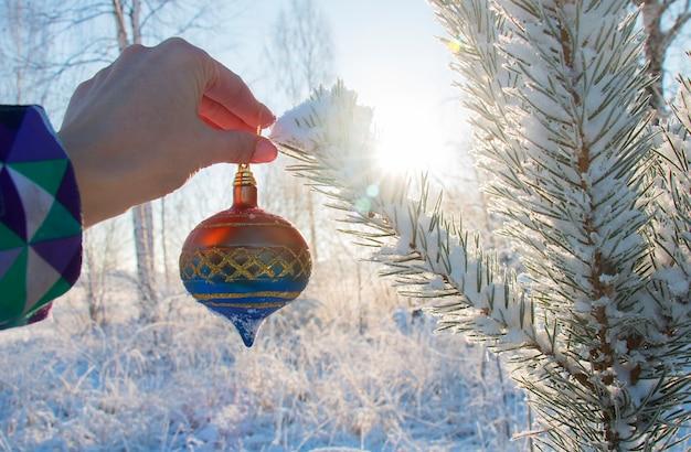 Девушка висит красивый елочный шар, украшение на заснеженной хвойной ветке в лесу в морозный зимний день