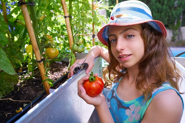 Girl harvesting tomatoes in a table orchard