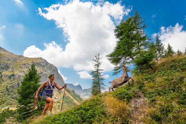 ハイカーの女の子が山でアイベックスに会います