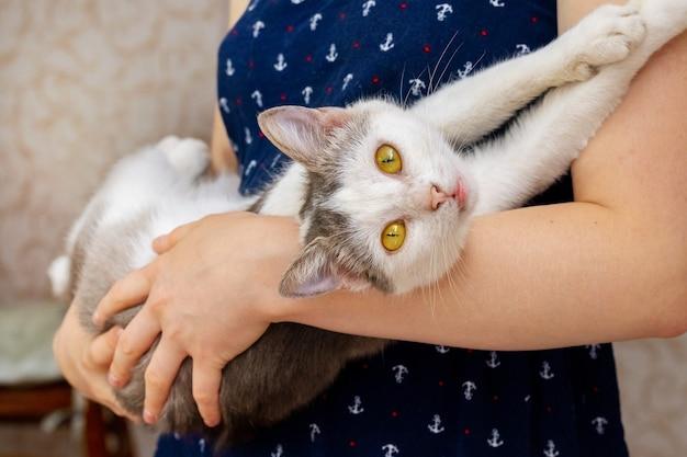 部屋で彼女の腕に猫を抱いている女の子。気配りのある表情の猫×女の子の手