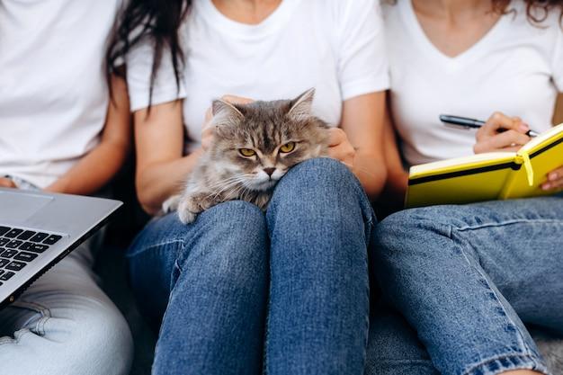 彼女の膝の上に猫を持って女の子。
