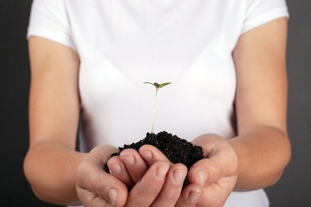 彼女の手のクローズアップで若いマリファナの植物を保持している女の子。手のひらで大麻の芽。