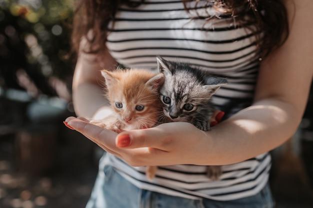 Девушка держит в руках милых котят маленькие красные и серые котята в человеческих руках концепция ухода за животными