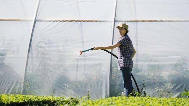 Девушка держит шланг и поливает молодые зеленые саженцы.