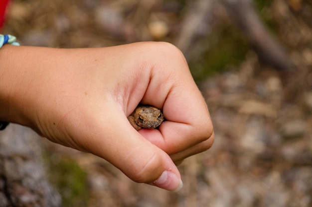 Girl holding a toad in her fist