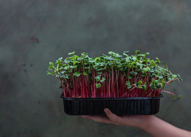 Girl holds a black tray with microgreen raw sprouts healthy eating and diet vegan lifestyle