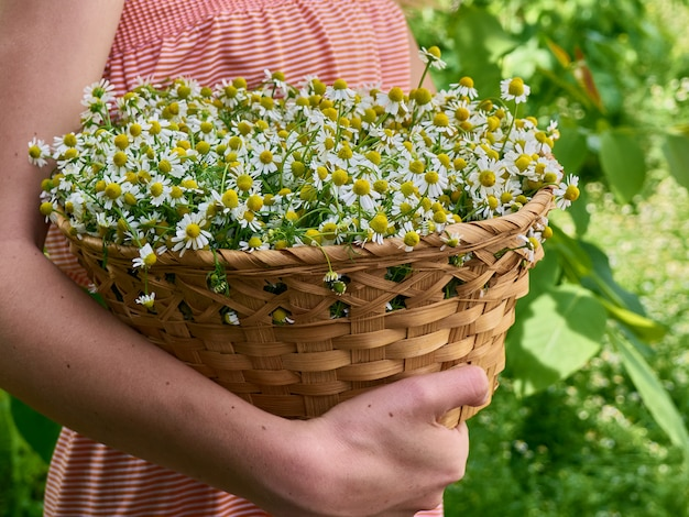 Girl holds camomiles.