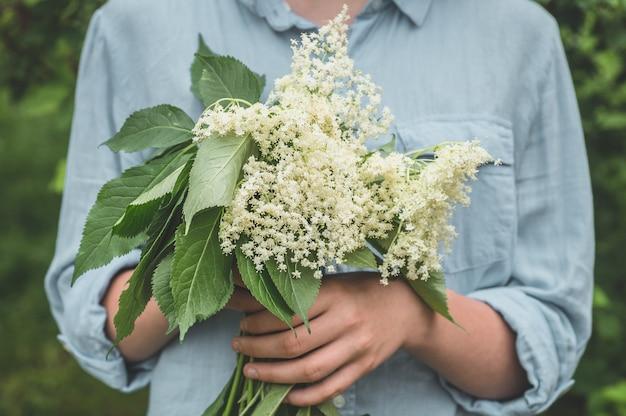 Girl holds in hands elderberry flowers in garden