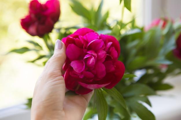 女の子は彼女の手を握って美しいつぼみのピンクの牡丹