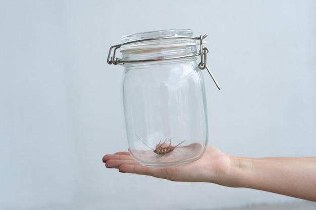 The girl holds on her palm a glass jar with a cockroach inside