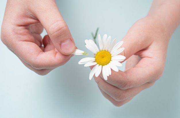 Girl holds a white chamomile in her hands and guess on her petals on blue background. top view and macro image