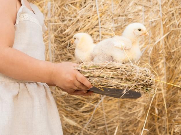 リネンのドレスの少女は、ふわふわの赤ちゃんの雛と巣を保持します。