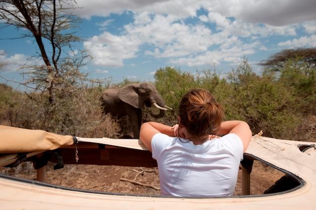 Девушка в сафари грузовик смотрит на слона