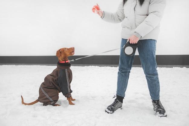 Девушка в теплой одежде и одетая собака на поводке зимой играет мячом в снегу