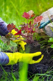 Девушка занимается посадкой цветов в саду