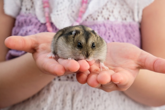 The girl is holding a little hamster in her arms