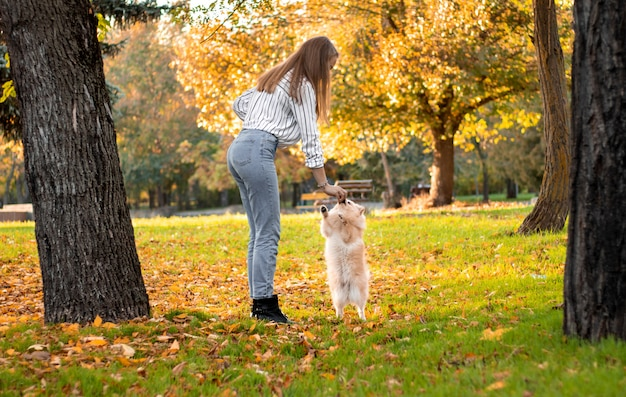 A girl is training a dog in a park among autumn leaves