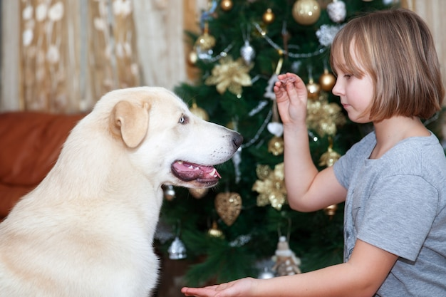 Girl plays with labrador at christmas tree in living room