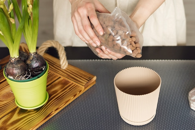 Girl pours fertilizer granules on the bottom of a pot for indoor plants, planting plants at home