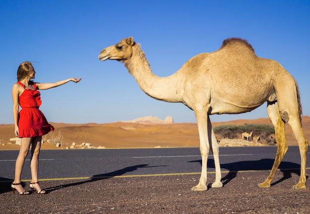 Girl raise hand to wild camel in dubai desert