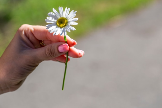 In the girl's hand a daisy, summer sunny day