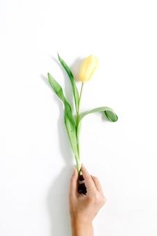 화이트에 아름 다운 노란 튤립 꽃을 들고 여자의 손