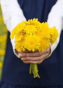 Girl's hands holding a bouquet of bright yellow dandelions.
