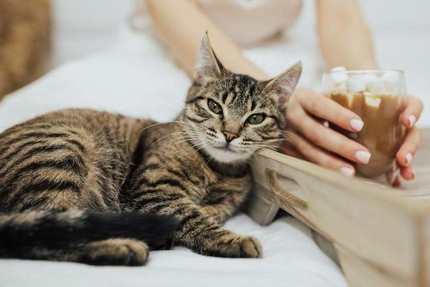 Руки девушки держат капучино, пока кошка лежит рядом