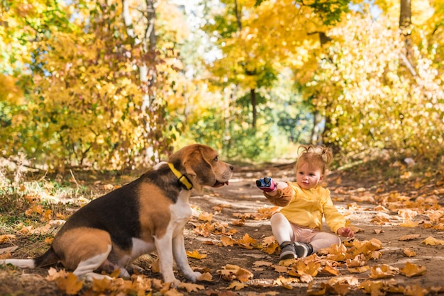Girl sitting with her beagle dog in autumn leafs at forest