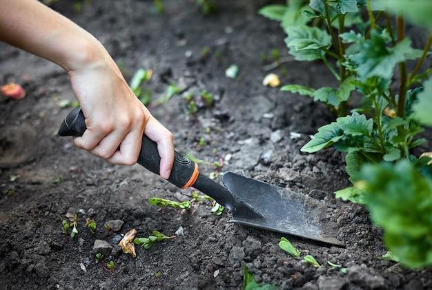 소녀는 정원 삽으로 정원에서 식물을 삽니다. 클로즈업, 선택적 초점