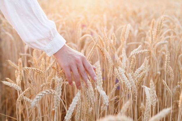 女の子は日没のクローズアップで夏に黄色の熟した小麦を撫でる