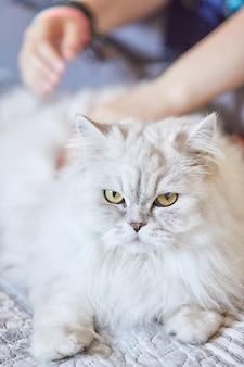 집에서 영국 상아탑에 틀어 박힌 흰 고양이를 쓰 다듬어 소녀