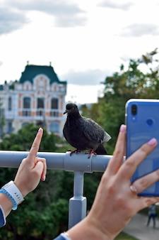 女の子は公園で鳩の写真を撮る