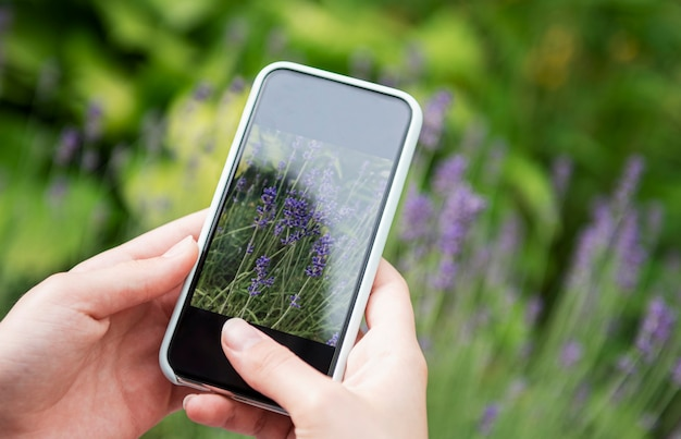 Girl taking pictures of lavender flowers on smartphone Premium Photo