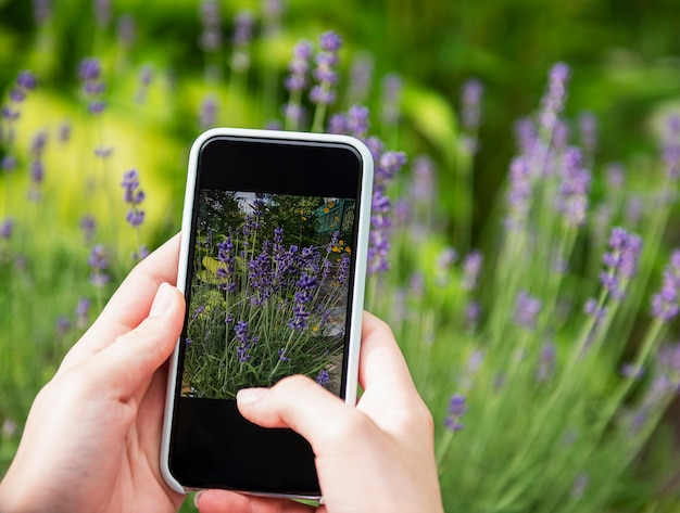 Girl taking pictures of lavender flowers on smartphone