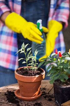 Девушка пересаживает цветы в саду. цветочные горшки и растения для пересадки