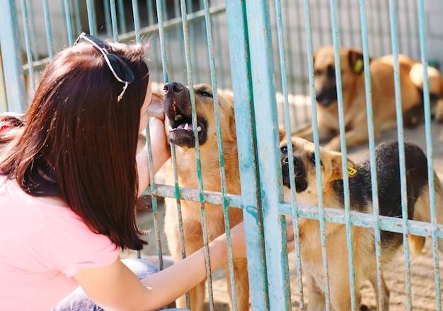 Девочка-волонтер в питомнике для собак. приют для бездомных собак.