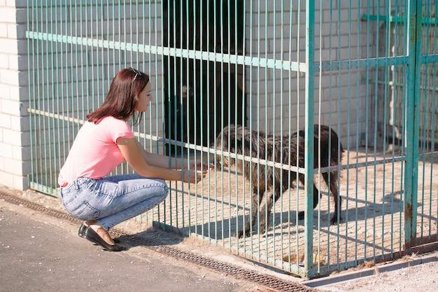 Girl volunteer in the nursery for dogs. shelter for stray dogs.