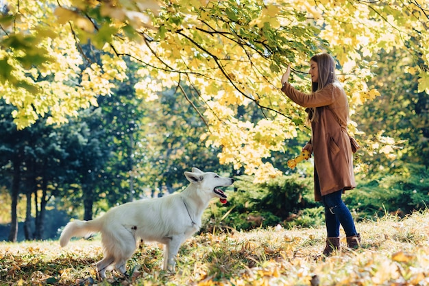 女の子は若い白いスイス・シェパード・ドッグと秋の公園で散歩