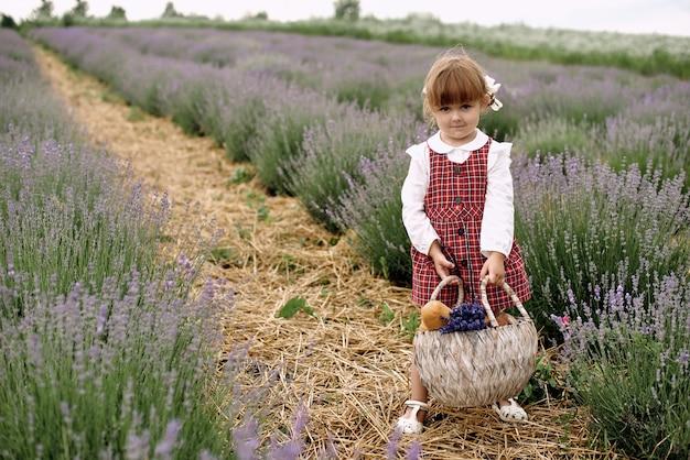 소녀는 라벤더 밭에 꽃을 수집 산책.